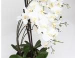 https://sklep.hydroponika.pl/Ro%C5%9Bliny_i_kwiaty_sztuczne/storczyki/5355-Phalenopsis_w_b%C5%82ocie_92_cm_bia%C5%82o-kremowa.html - zdjęcie 3
